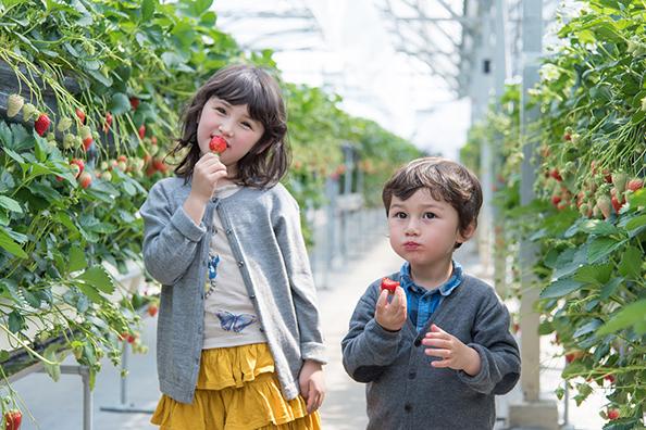 フルーツパークイチゴ狩り