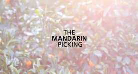 The Mandarin Picking