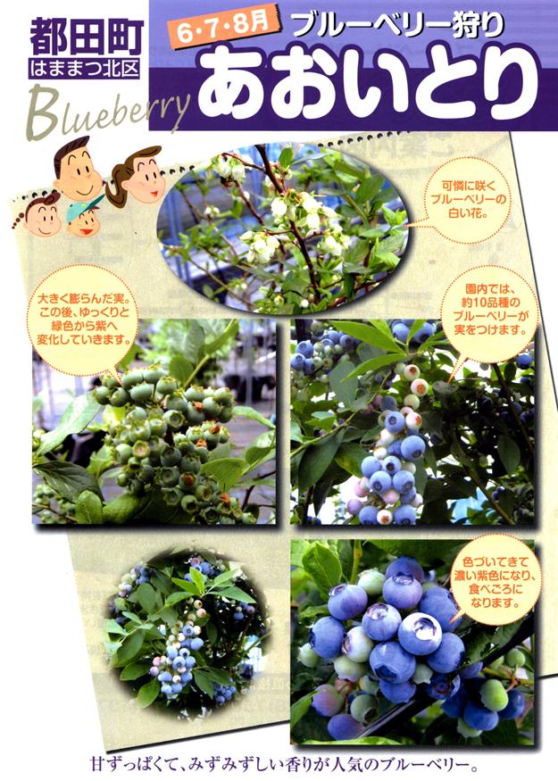 http://www.inhamamatsu.com/recommend/bbg_aoi_omo.jpg